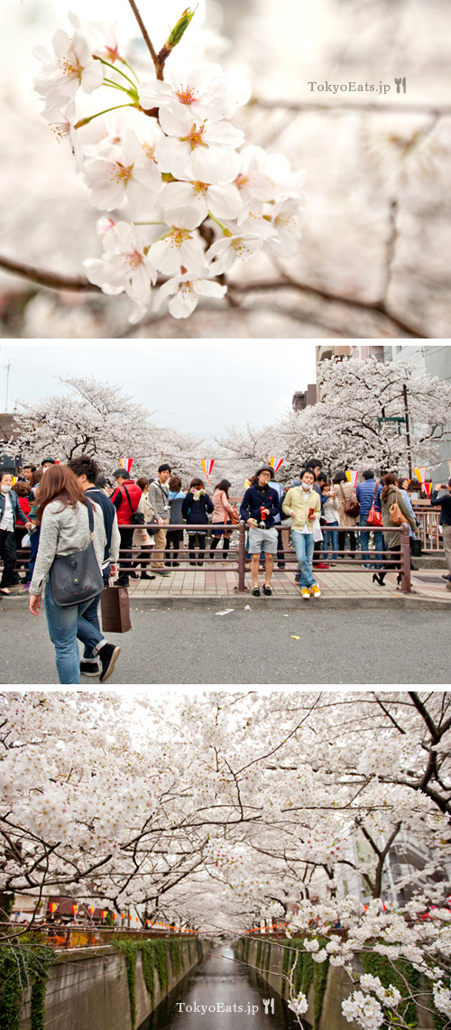Cherry blossoms - Ohanami 2013