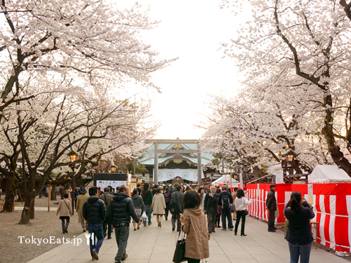Cherry blossoms - Ohanami 2014